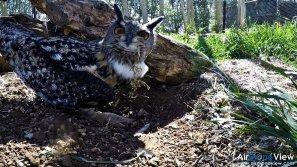 AMUS Air Drone View reportaje drones buho real aguila buitre cigüeña dron drones rpas uav aereo buitres centro conservacion naturaleza accion mundo salvaje www.airdroneview.com (10)