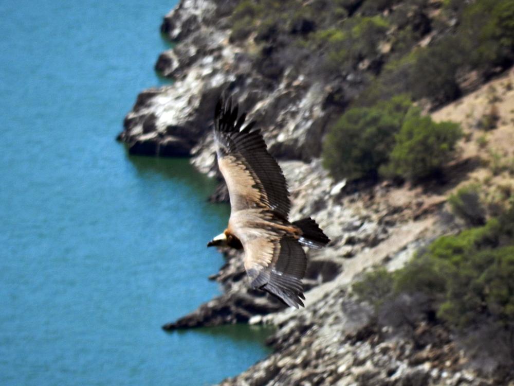 monfragüe air drone view www.airdroneview.com buitre hospederia operador reportaje foto video aereo parque natural (43)