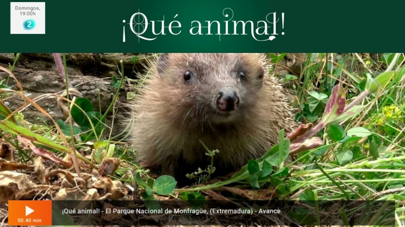 Programa ¡Qué Animal! de RTVE – Capítulo Monfragüe – Planos adrone