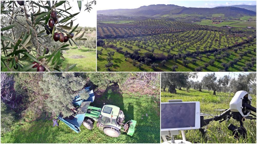 airdroneview oroliquido aceite el molino de zafra video aereo aerialview publicidad drones operadores extremadura badajoz legal turismo dehesa