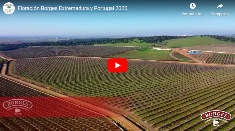 Borges International Group – Floración almendros España y Portugal 2020