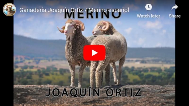 El espectacular vídeo de la Ganadería Joaquín Ortíz – Los orígenes de la razamerina
